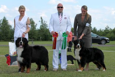 BOB & BOS Bernese Mountain Dog at Danish Speciality